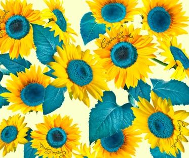 031 - Sunflower