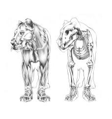 359 - Onça Muscle